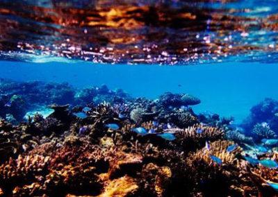 Fiji Beachfront Resort For Sale, Taveuni. Gallery Photos (18)
