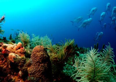 Fiji Beachfront Resort For Sale, Taveuni. Gallery Photos (6)