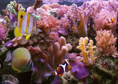 Fiji Beachfront Resort For Sale, Taveuni. Gallery Photos (8)